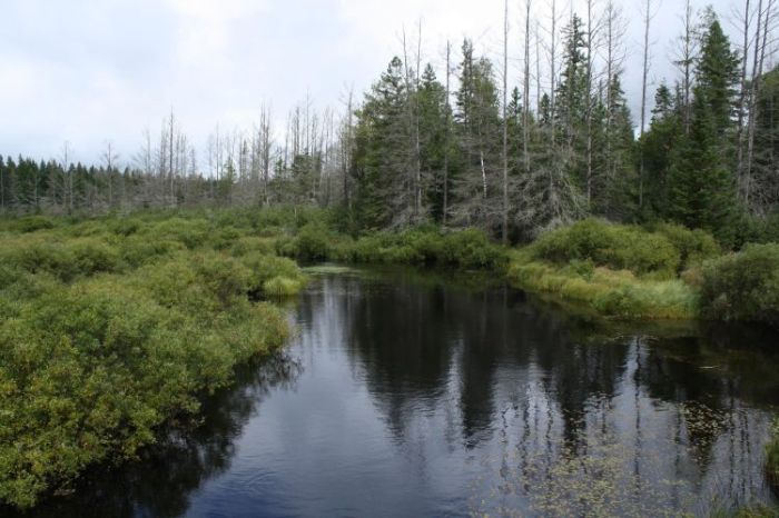 Chequamegon-Nicolet-NF_Headwaters-Wilderness_wiki.jpg