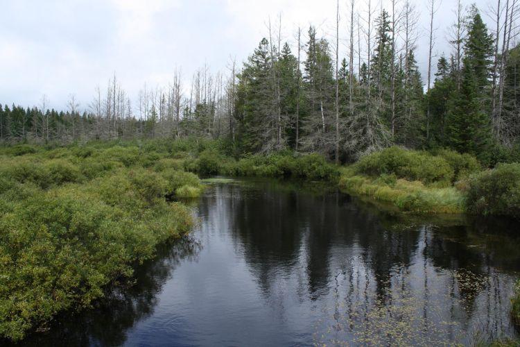 Chequamegon-Nicolet-NF_Headwaters-Wilderness_wiki.jpg